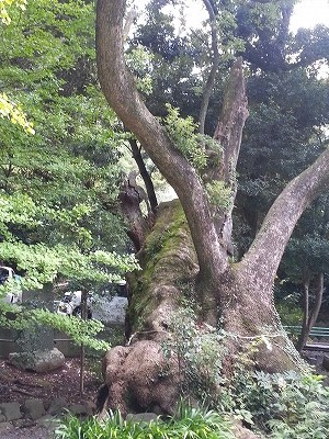 熱海の来宮神社 (4)