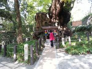 熱海の来宮神社 (6)