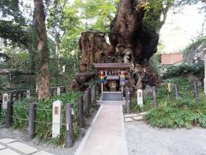 熱海の来宮神社 (7)