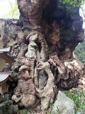 熱海の来宮神社 (8)