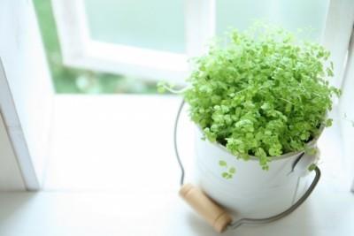 インテリア風水植物 (3)